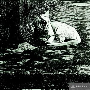 Download Prisma Apk Photo Editor App for Android